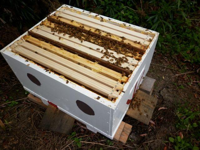 nuc beehive