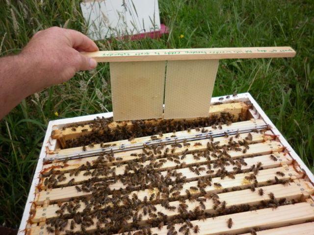 Breeder Hive