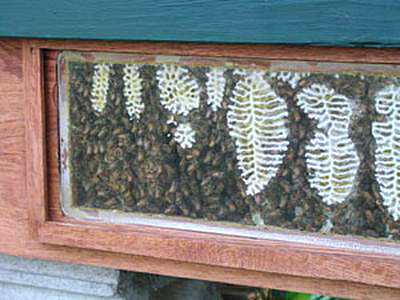 Close up of window - Note the different comb thickness.