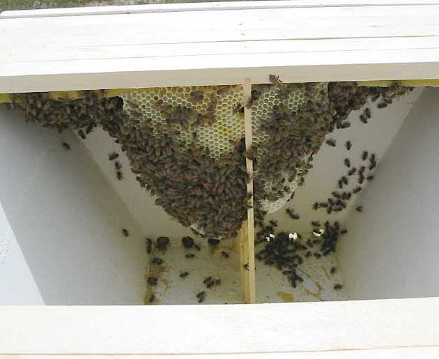 From The Rear Of The Hive, Top Bar Number 5 Had The Largest Amount Of