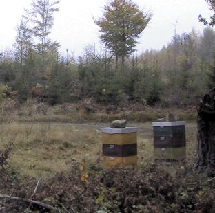 Part of the test apiary of Beekeeper B. Photo: E Osterlund
