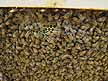 Top bar hive comb with bees