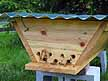 Top bar hive entrance