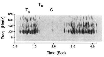 FIGURE 7.1. Audiospectrogram analysis of the sound produced during the waggle dance. Sound pulses produced during the two straight runs (Ts) appear as dark areas. The large blank between straight runs (C) represents the turnaround time between straight runs. An inverse of the total of those two (Tc) indicates the number of dances per minute (after Wenner 1962).