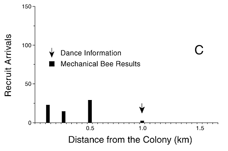 C) In the Michelsen et al. (1989) mechanical bee experiments, only six out of 68 recruits arrived at the 1,000 m station after they had attended the dance maneuver of the model bee (data from Michelsen et al., 1989:fig. 3C).