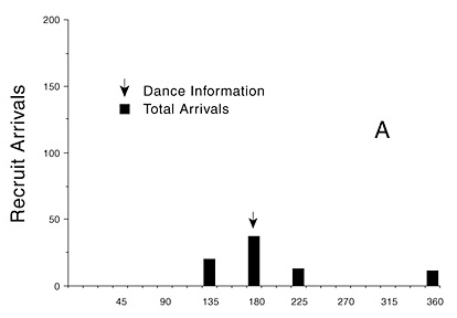 Figure 8. The Michelsen et al. (1989) mechanical bee direction experiments suffered a flaw in experimental design (e.g., Wenner and Wells, 1990:excursus PN). A) The results they obtained when a mechanical bee provided information about a station in one direction, with test stations located on either side of it and in the opposite direction (data from Michelsen et al., 1989: fig. 2A, total of three experiments).