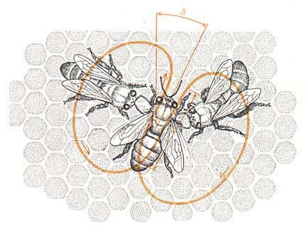 wenner-sound-bees-7b