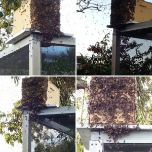 Our First Swarm!