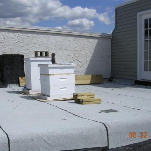 Rooftop hives
