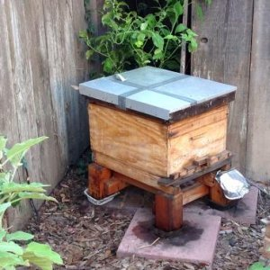 Hand-made Single Deep Langstroth - Attacked by ants many times -- stand made from a shipping pallet, oil pans drying led to ant attacks.  Spicy hive,