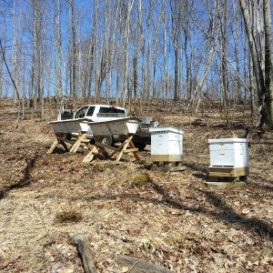 Hives all ready for bees.
